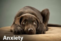 Finding The Best Calming Treats For Dogs